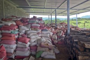 Bags of coffee parchment stored at Honduras mill