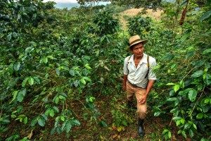 A coffee farmer associated with the Coffeelands Foundation, pictured in his field surrounded by healthy coffee plants