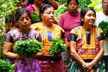 Oaxaca Mexico Coffee Farmers
