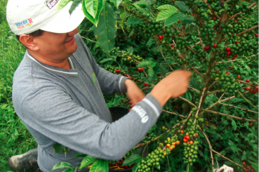 Colombia-Huila-Finca-La-Esperanza-Coffee-Cherries