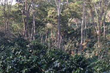 Colombia Bucaramanga San Gil Coffee Farm