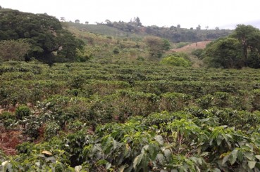 Costa Rica Finca Las Pavas Coffee Farm