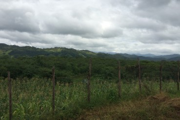 Honduras-Siguatepeque-Coffee-Growing-Region
