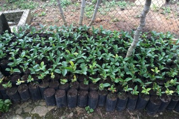 Sustainable Coffee Saplings in Ouxaca, Mexico
