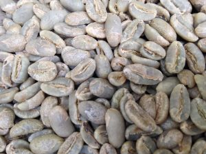 Longberry Arabica Coffee Variety from Wahana Estate, Sumatra Indonesia