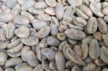 Longberry Coffee Varietals in Sumatra Wahana Estate