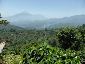 View of Guatemalan Coffee Farm and Volcano in Huehuetenango, Guatemala