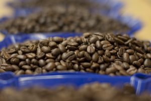 Closeup of Fresh Roasted Specialty Coffee Beans