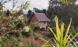 Coffee Grower Thatched Hut Home, Eastern Highlands, Papua New Guinea