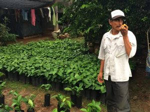 Fair Trade Organic Coffee Farmer with Young Coffee Sapling Nursery in Oaxaca, Mexico