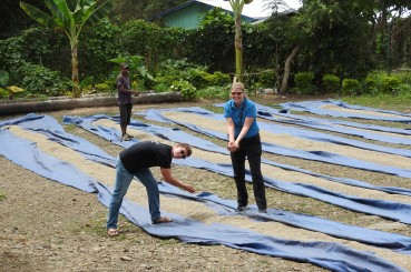 Fair Trade Coffee Drying beds