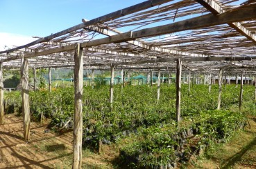 environmentally friendly saplling nursery papua new guinea