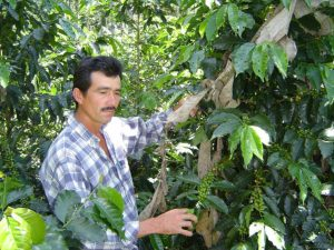 Colombian Coffee Farmer and Coffee Trees in Bucaramanga, Santander Department