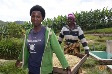 Female Coffee Farmers Misozi Hingakawa Womens Coffee Coop Rwanda