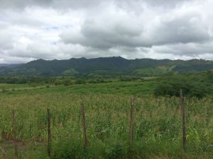 Groves of Arabica Coffee Farms on the Hillsides Siguatepeque Honduras