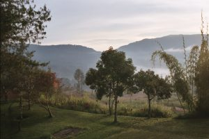 Beautiful sunrise of green pastures, trees and walking trails at the Purosa A organic coffee farm in the Eastern Highlands of Papua New Guinea