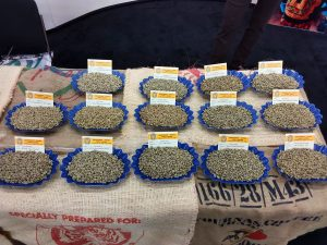 Specialty Green Coffee Samples from Vournas Coffee Trading Green Coffee Importers