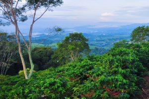 Costa Rica Hacienda Sonora Coffee Farm