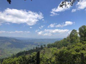 El Socorro Sandoval Coffee Farm, Honduras